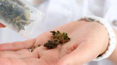 marijuana-in-hand