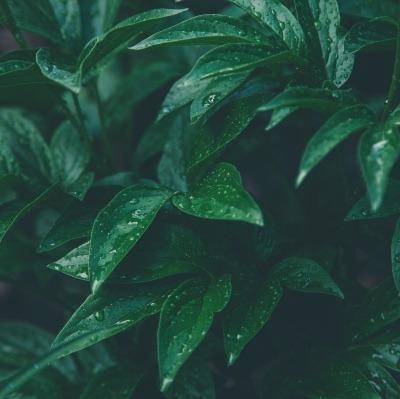 Green Leaf